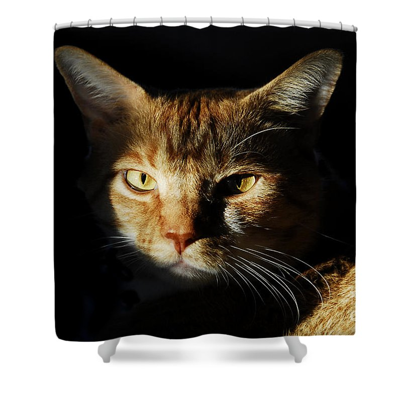 Cat Shower Curtain featuring the photograph Cat In Shadow by David Lee Thompson
