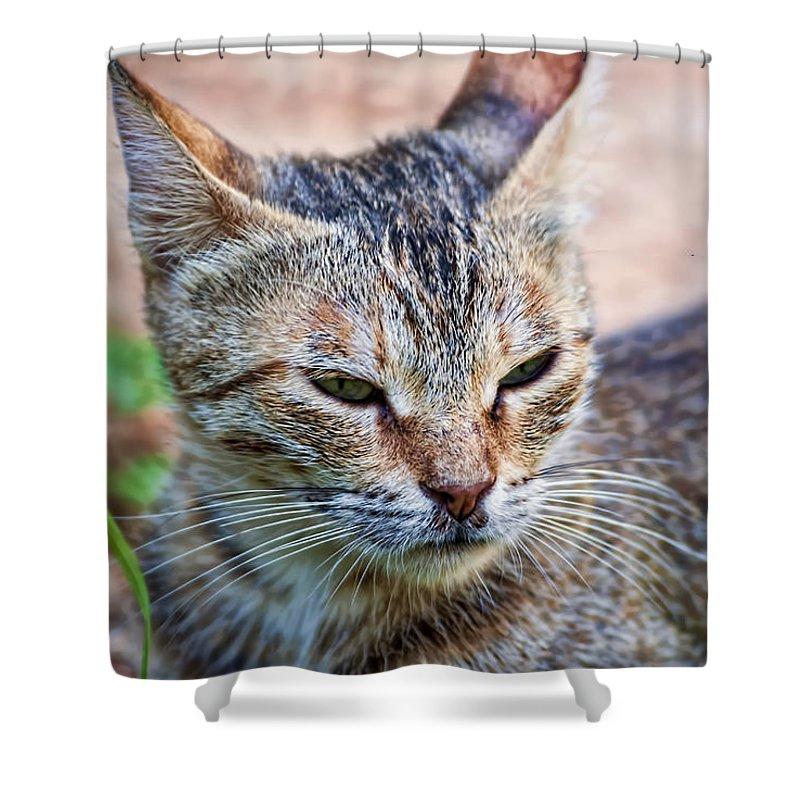 Cat Shower Curtain for Sale by Isam Awad
