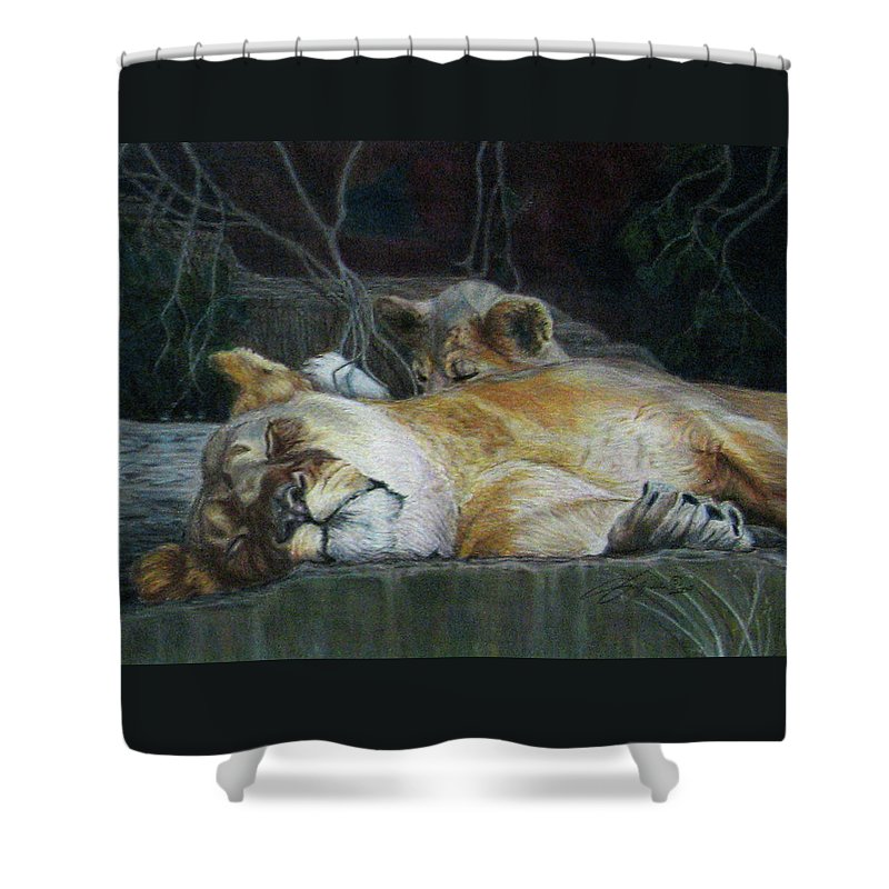 Fuqua - Artwork Shower Curtain featuring the drawing Cat Nap by Beverly Fuqua