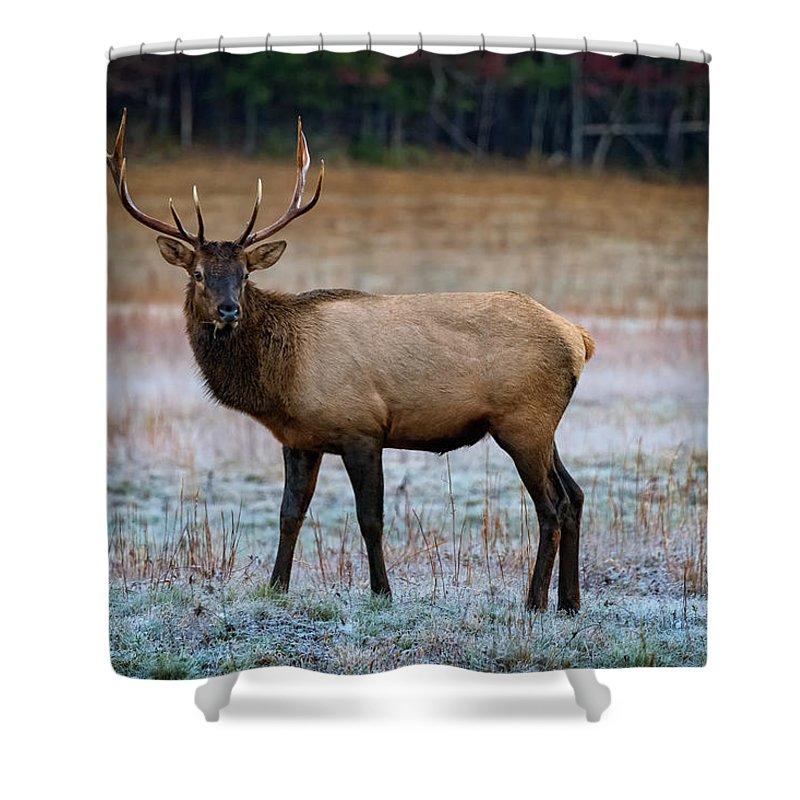 Elk Shower Curtain Featuring The Photograph Cataloochee By Rick Berk