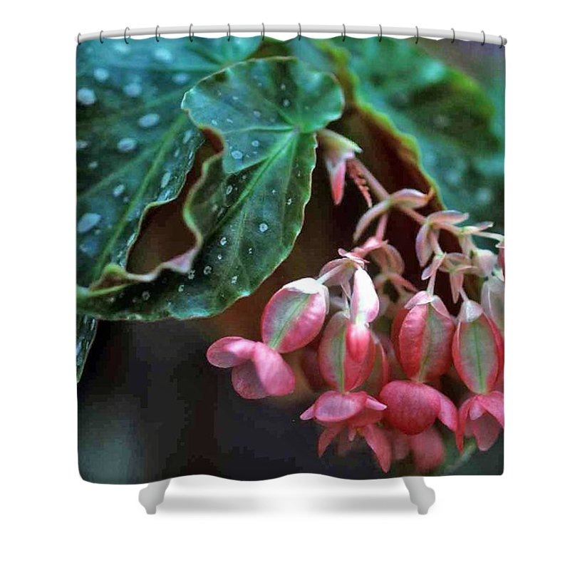 Cat's Paw Begonia Shower Curtain featuring the photograph Cat's Paw Begonia by Laurie Paci