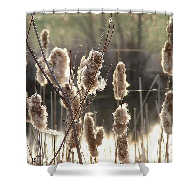 Shower Curtain featuring the photograph Cattails by Luciana Seymour