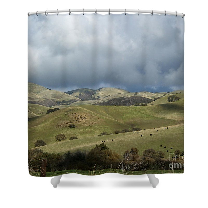 Artoffoxvox Shower Curtain featuring the photograph Cattle And Countryside Photograph by Kristen Fox