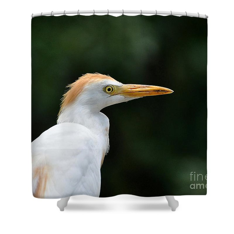 Egret Shower Curtain featuring the photograph Cattle Egret Close-up by Al Powell Photography USA