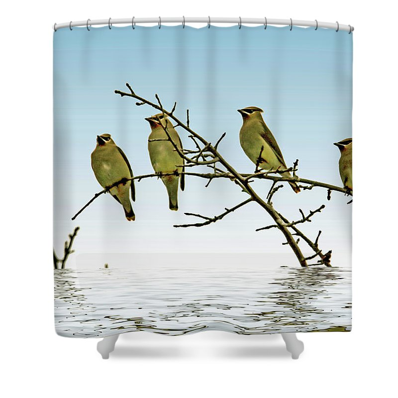 Texture Shower Curtain featuring the photograph Cedar Waxwings On A Branch by Geraldine Scull