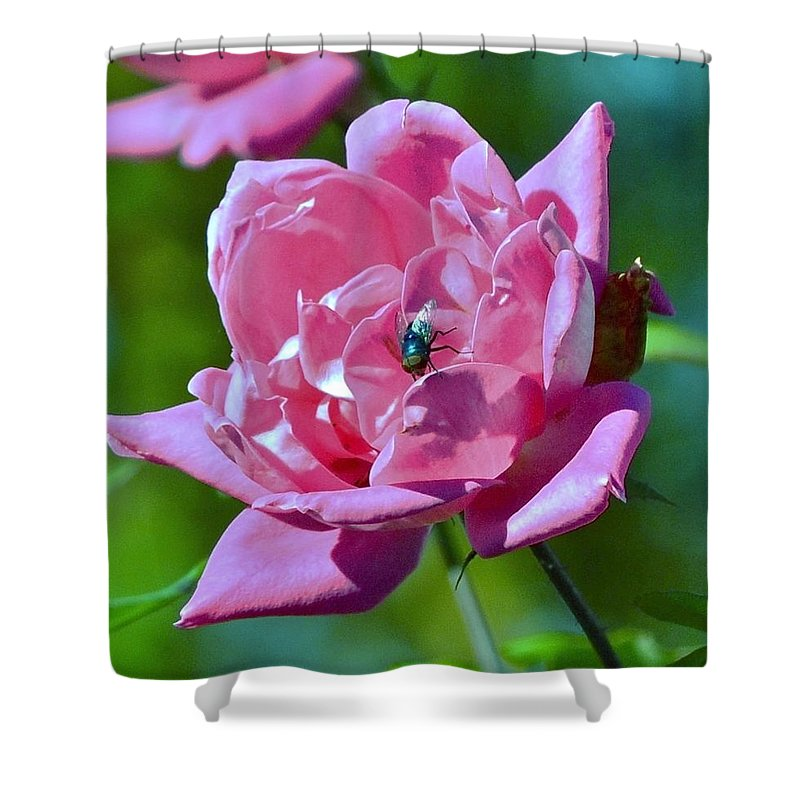 Roses Shower Curtain featuring the photograph Cemetery Rose by Eileen Brymer