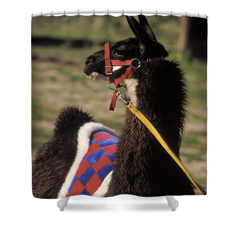 Llama Shower Curtain featuring the photograph Chaco by Jerry McElroy