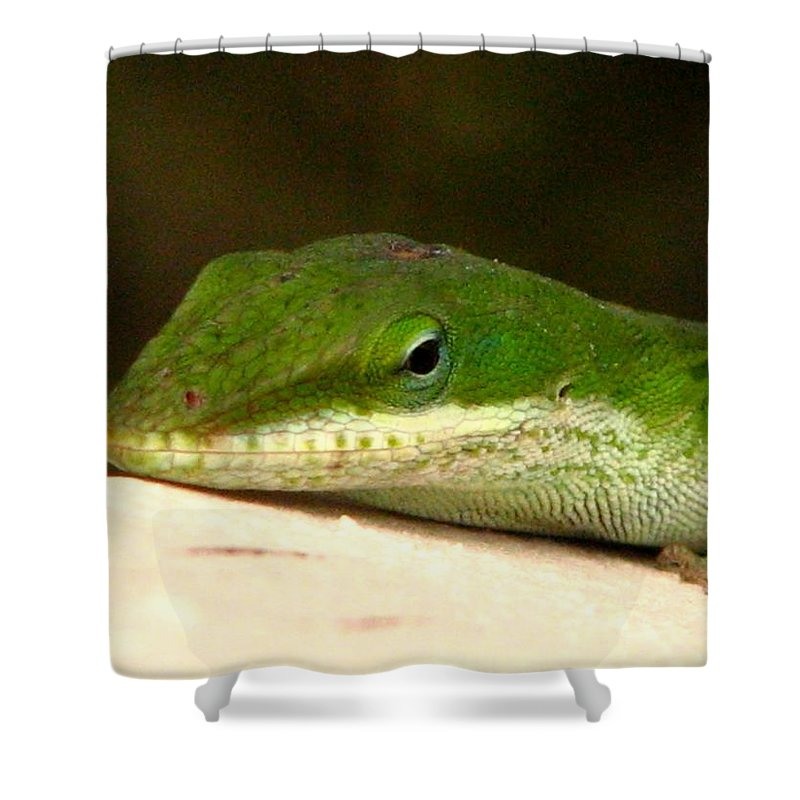 Chameleon Shower Curtain featuring the photograph Chameleon 2 by J M Farris Photography
