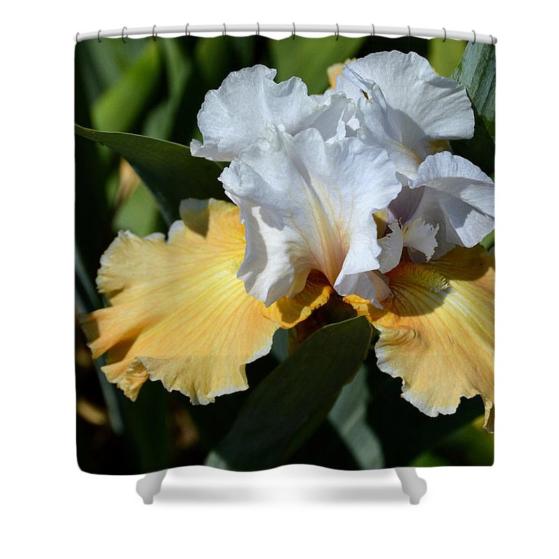 Flower Shower Curtain featuring the photograph Champagne Iris by Belinda Stucki