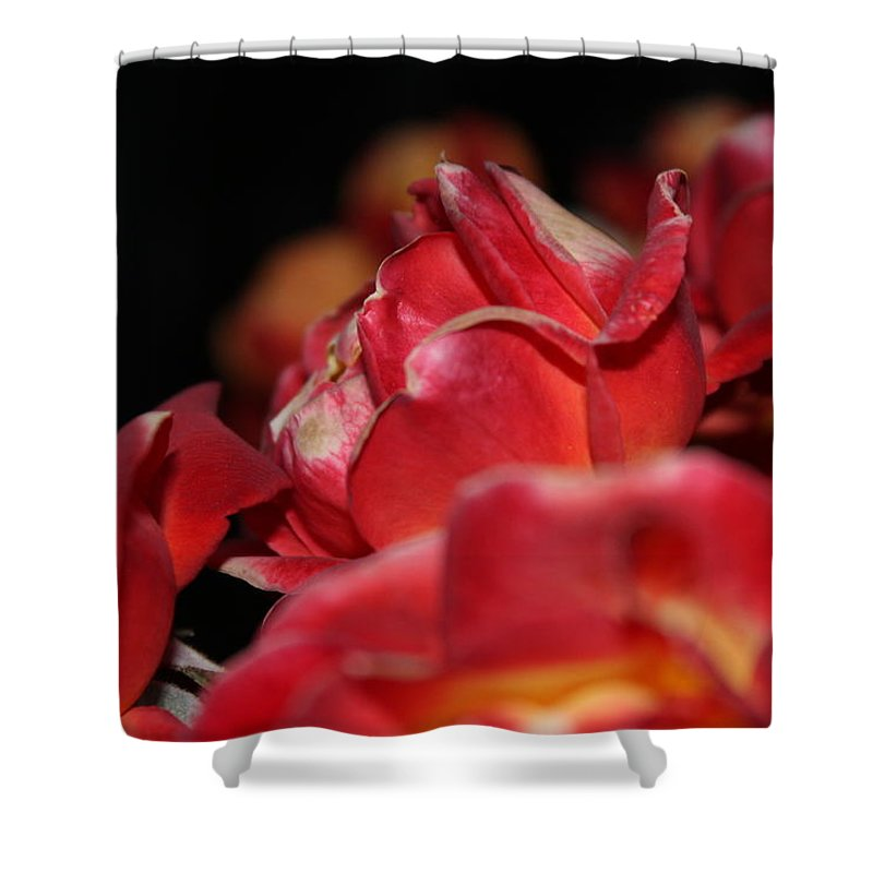 Charisma Roses Shower Curtain featuring the photograph Charisma Roses 3 by LKB Art and Photography