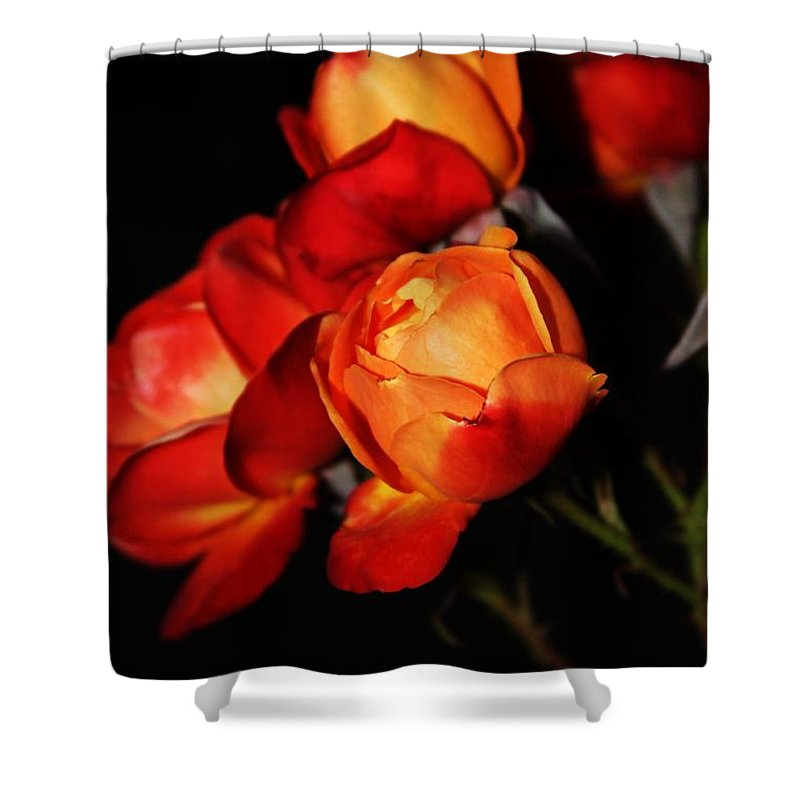 Charisma Roses Shower Curtain featuring the photograph Charisma Roses 4 by LKB Art and Photography