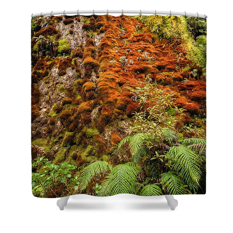 Fern Shower Curtain featuring the photograph Chasm Creek Cutting by Robert Green