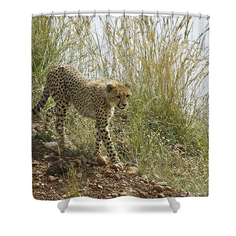 Africa Shower Curtain featuring the photograph Cheetah Exploration by Michele Burgess