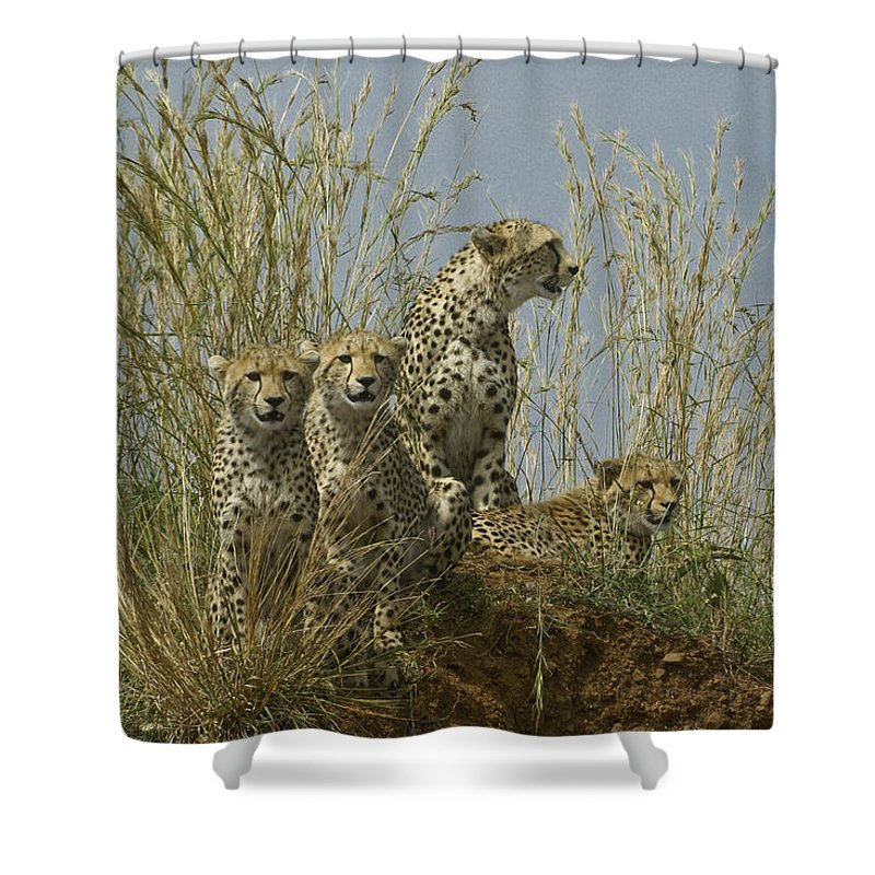 Africa Shower Curtain featuring the photograph Cheetah Family by Michele Burgess