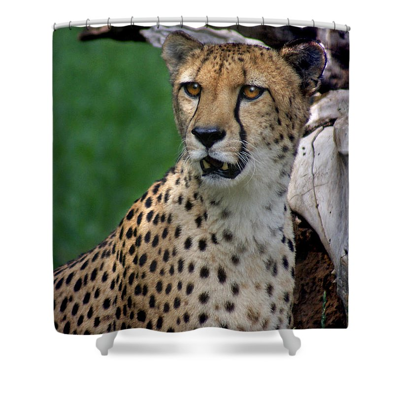 Cheeta Shower Curtain featuring the photograph Cheetah by Heather Coen