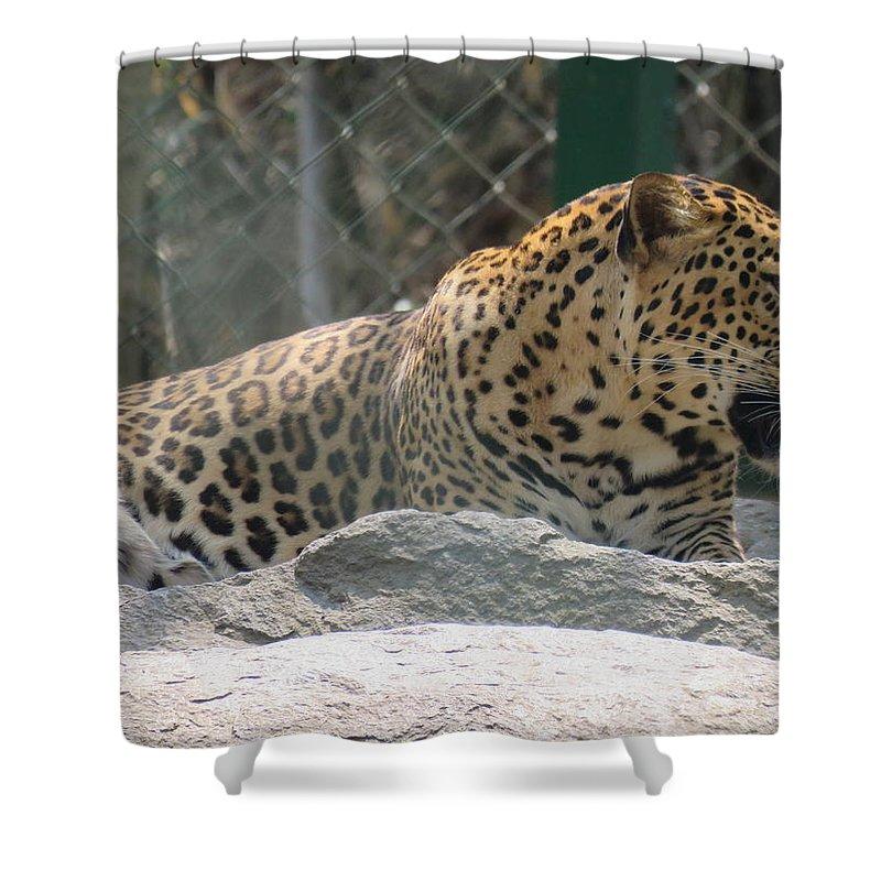 Leopard Shower Curtain featuring the photograph Cheetah by Utpal Datta
