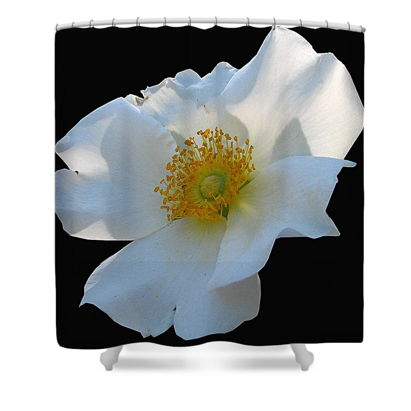 Cherokee Rose Shower Curtain featuring the photograph Cherokee Rose on Black by J M Farris Photography