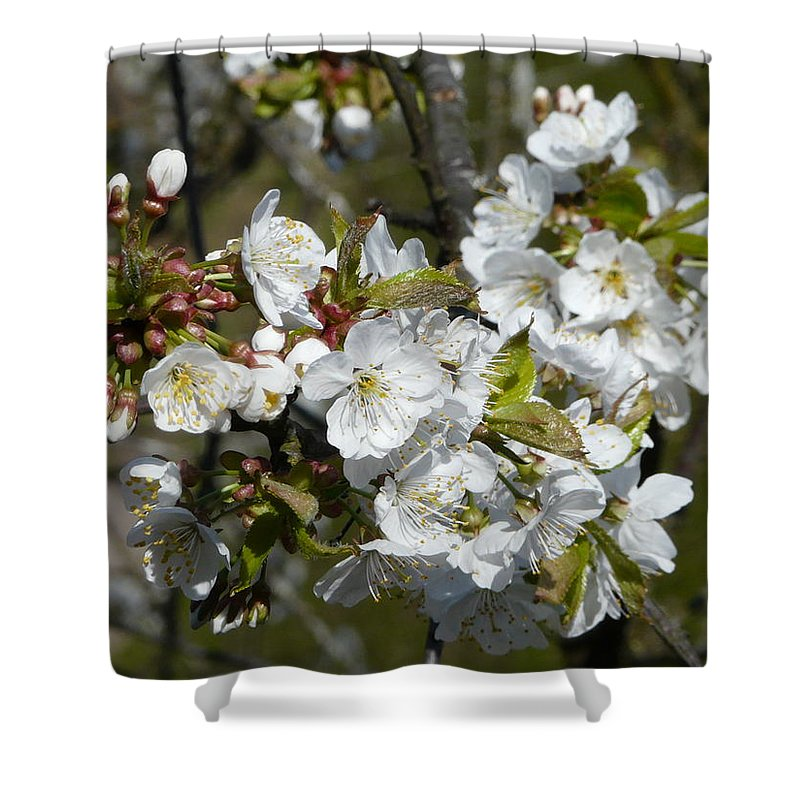 Cherry Shower Curtain featuring the photograph Cherry Blossom by Valerie Ornstein