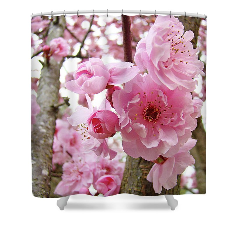 Nature Shower Curtain featuring the photograph Cherry Blossoms Art Prints 12 Cherry Tree Blossoms Artwork Nature Art Spring by Baslee Troutman