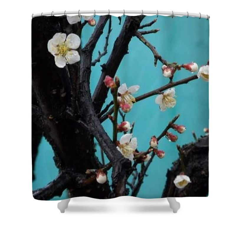 Cherry Shower Curtain featuring the photograph Cherry Branch by Elyse Fehrenbach