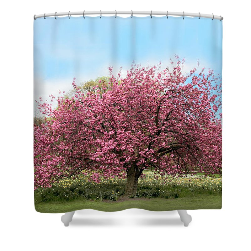 Nature Shower Curtain featuring the photograph Cherry Grove by Jessica Jenney