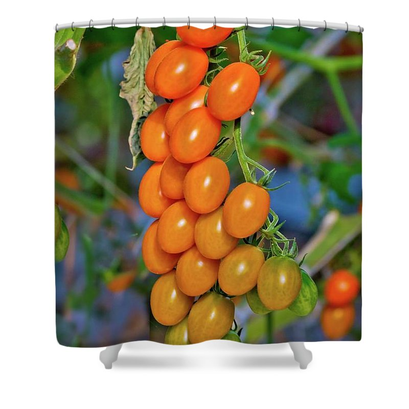 Tomatoes Shower Curtain featuring the photograph Cherry Tomatoes by Linda Unger