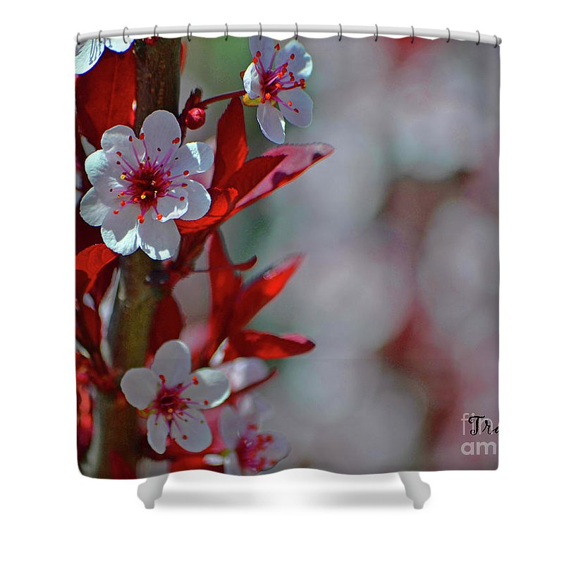 Cherry Tree Shower Curtain featuring the photograph Cherry by Traci Cottingham
