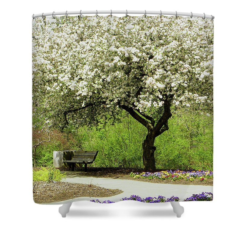 Cherry Tree Shower Curtain featuring the photograph Cherry Tree In Full Bloom by Sandi OReilly