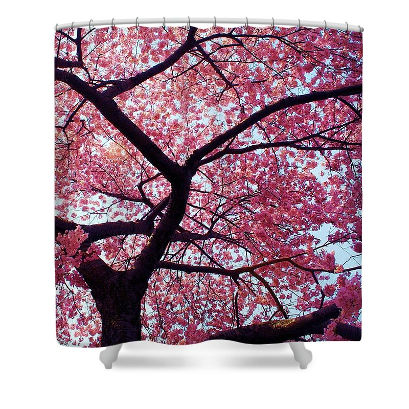 Cherry Tree Shower Curtain featuring the photograph Cherry Tree by Mitch Cat