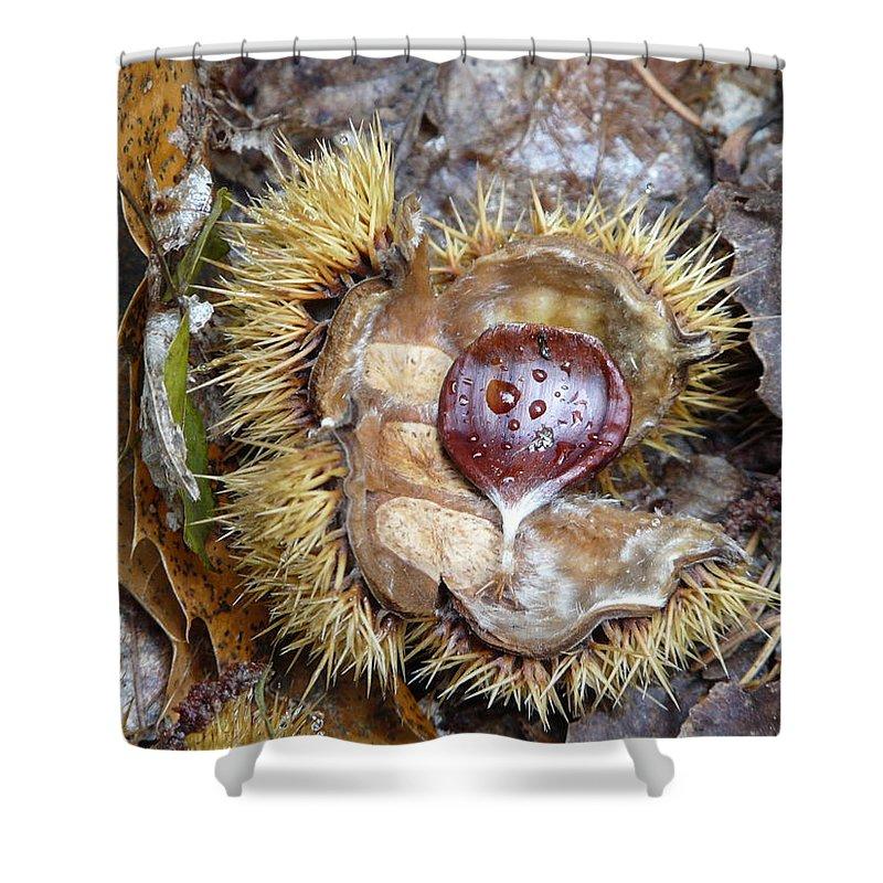 Chestnut Shower Curtain featuring the photograph Chestnut by Valerie Ornstein