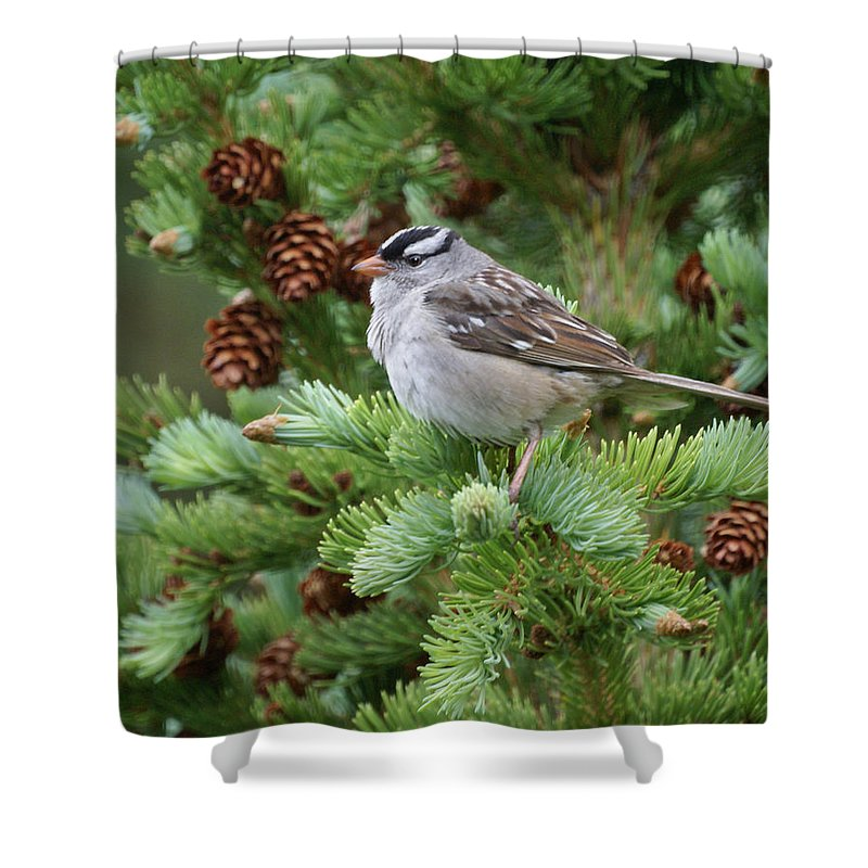 Chickadee Shower Curtain featuring the photograph Chickadee by Heather Coen