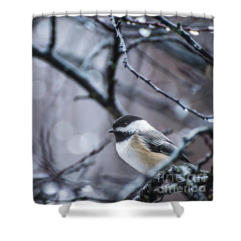 Black-capped Chickadee Shower Curtain featuring the photograph Chickadee Rain by Joann Long