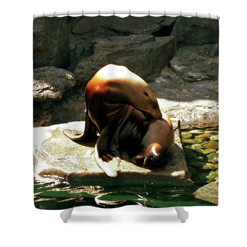 Seal Photographs Shower Curtain featuring the photograph Chillin' Out by Lourry Legarde
