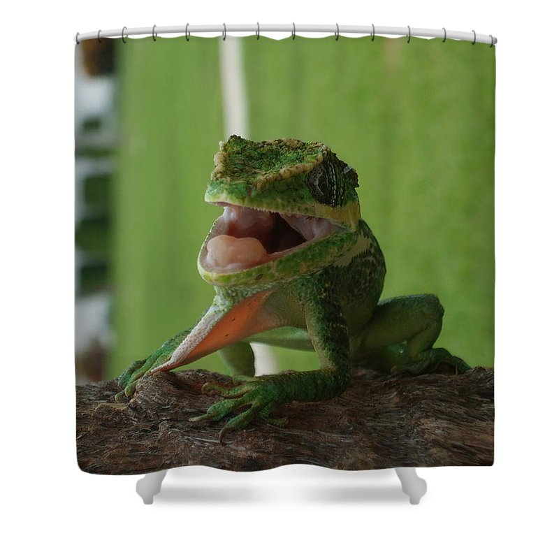Iguana Shower Curtain featuring the photograph Chilling On Wood by Rob Hans
