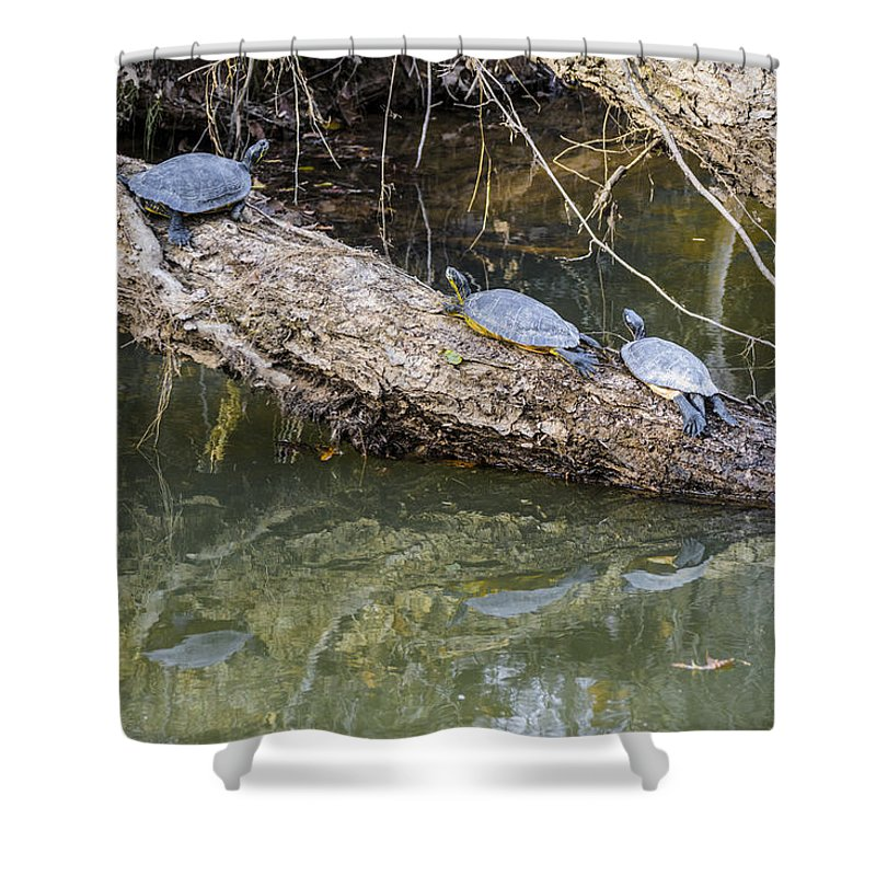 Turtles Shower Curtain featuring the photograph Chilling Turtles by William Hall