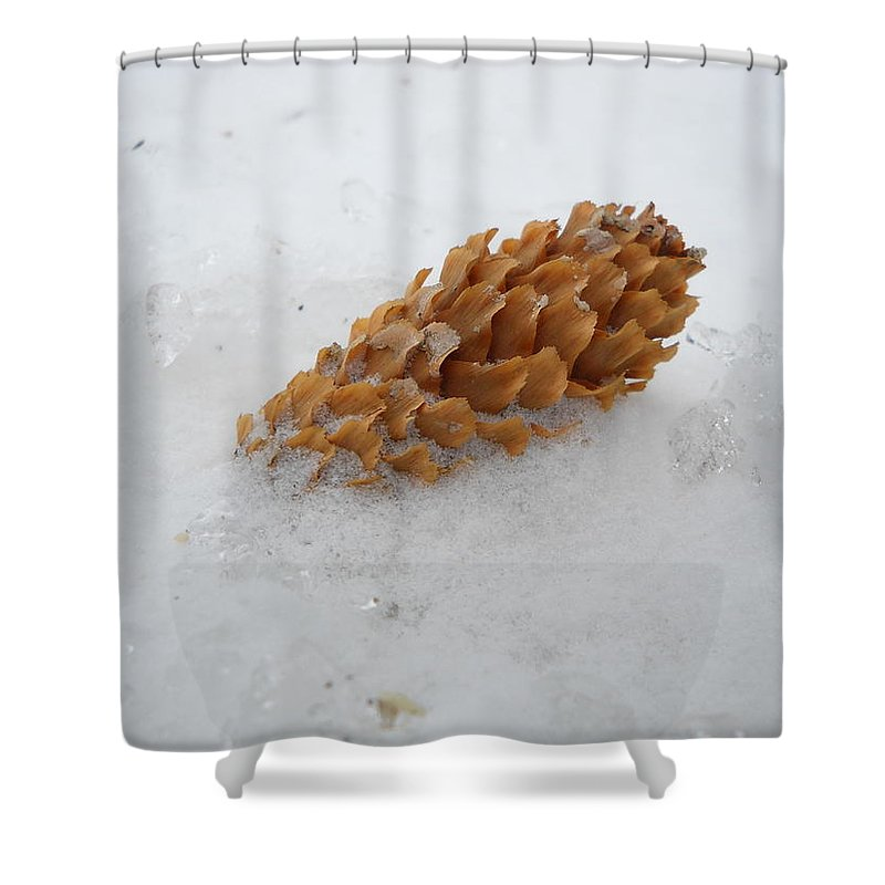 Pine Cone Shower Curtain featuring the photograph Chilly Pine Cone In Snow by Kent Lorentzen