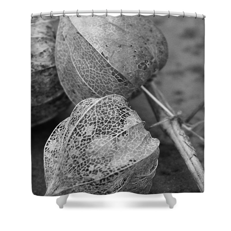 Chinese Lanterns Shower Curtain featuring the photograph Chinese Lanterns In Black And White by Modern Art