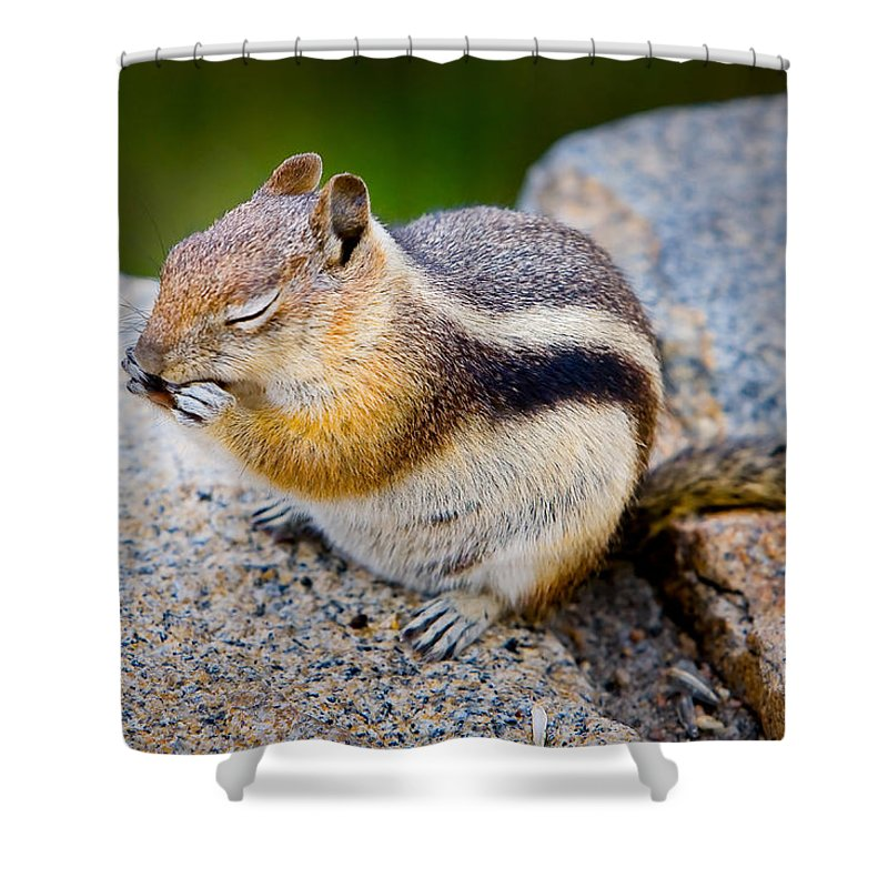 Squirrel Shower Curtain featuring the photograph Chipmunk by James O Thompson