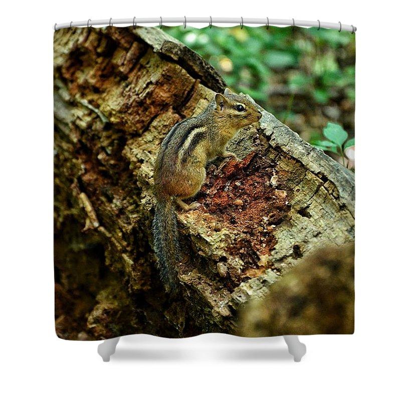 Chipmunk Shower Curtain featuring the photograph Chipmunk by Nikki Watson  McInnes