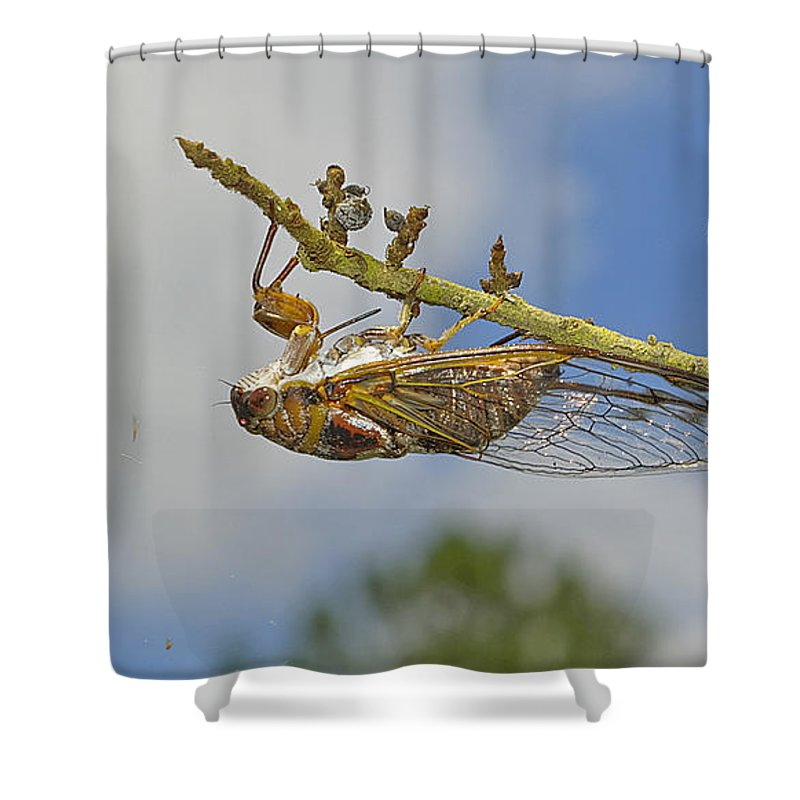 Cicada Shower Curtain featuring the photograph Chirrup Chirrup by Kenneth Albin