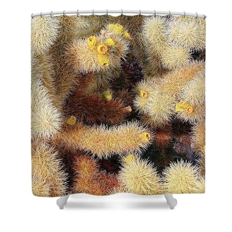 Joshua Tree Shower Curtain featuring the photograph Cholla Cactus by William Dey