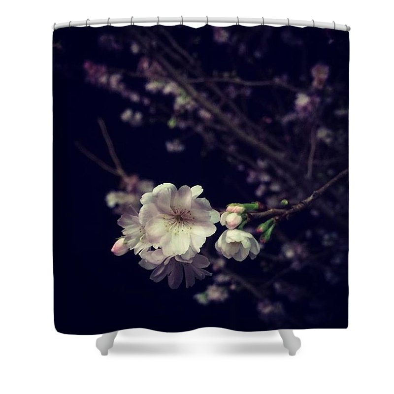 Cherryblossom Shower Curtains
