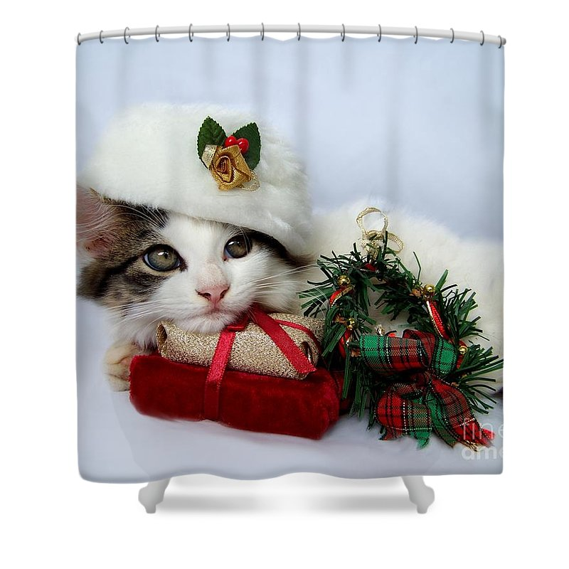 Christmas Shower Curtain featuring the photograph Christmas Kitten by Jai Johnson