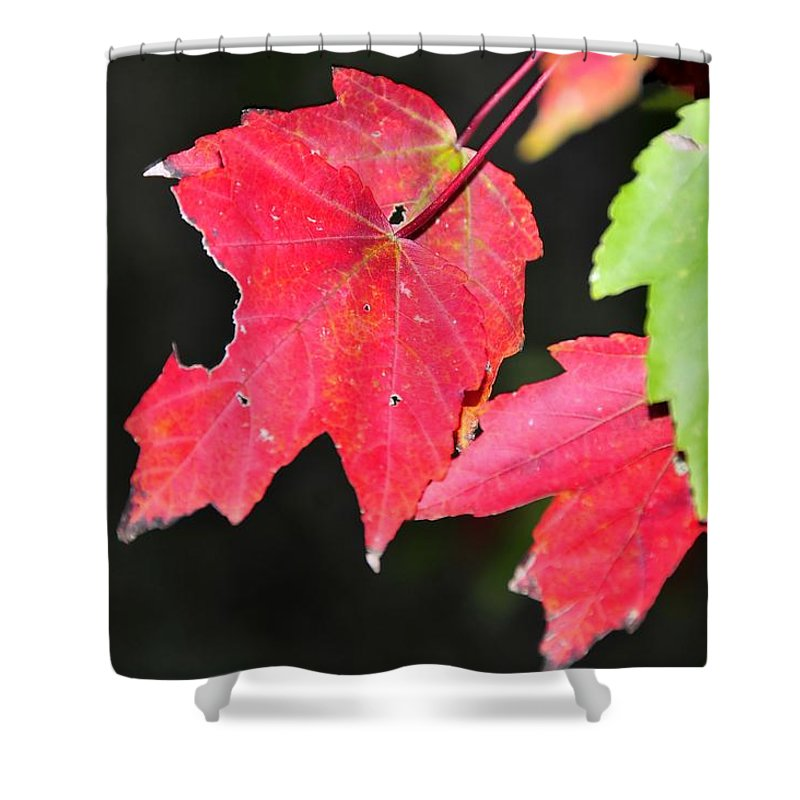 Leafs Shower Curtain featuring the photograph Christmas Leafs by David Lee Thompson