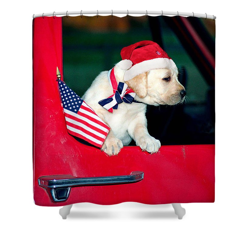Yellow Lab With American Flag In Red Pickup Truck With Santa Hat Shower Curtain featuring the photograph Christmas Parade by Dale Hall