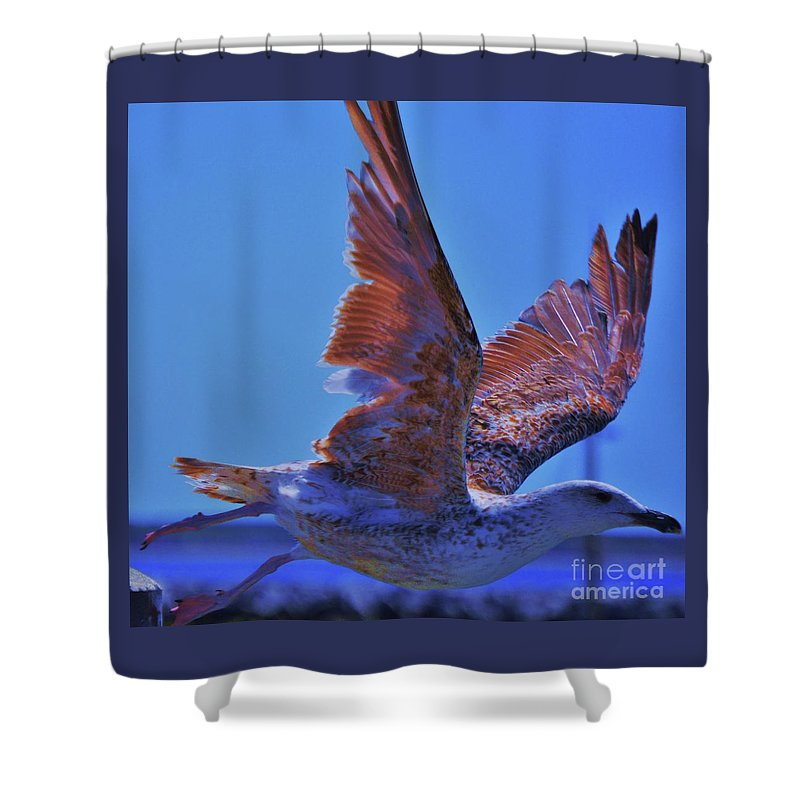 Seagull Art Movement Nature Outdoors Bird Portrait Sunlit Wings Provincetown Unique Moment Cape Cod Canvas Print Metal Frame Poster Print Available On Greeting Cards Tote Bags Phone Cases T Shirts Mugs Shower Curtains Throw Pillows Shower Curtain featuring the photograph Ciao by Poet's Eye