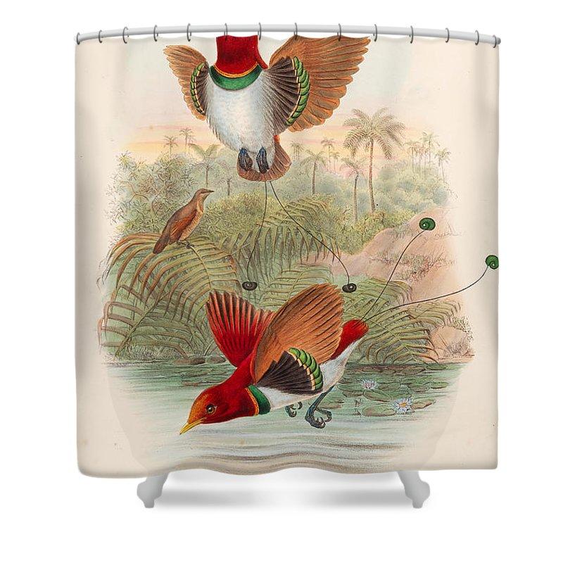 William Hart And John Gould Shower Curtain Featuring The Drawing Cicinnurus Regius King Bird Of