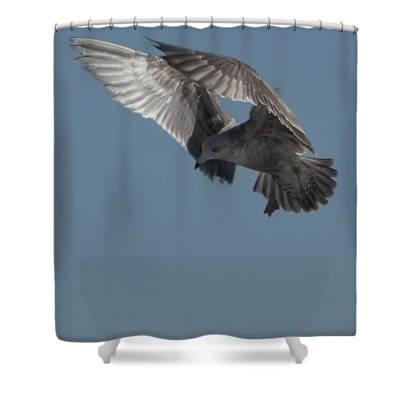 Seagull Shower Curtain featuring the photograph Clams for Dinner 3 by Steven Natanson