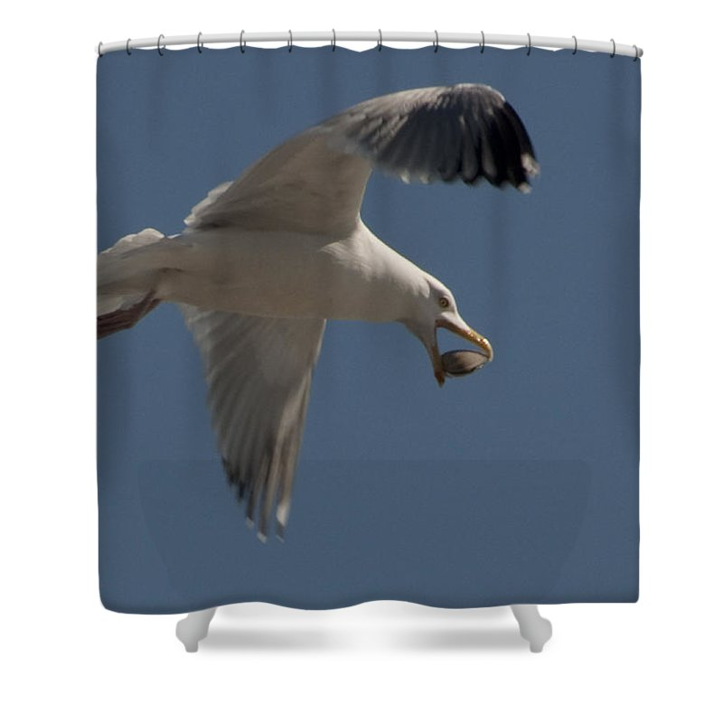 Seagull Shower Curtain featuring the photograph Clams For Dinner by Steven Natanson