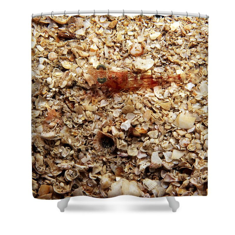 Costa Rica Shower Curtain featuring the photograph Cleaner Shrimp On Shell Covered Bottom by James Forte